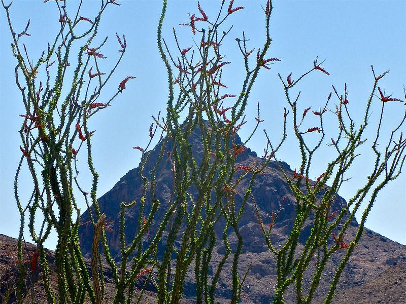 Mopah Peak