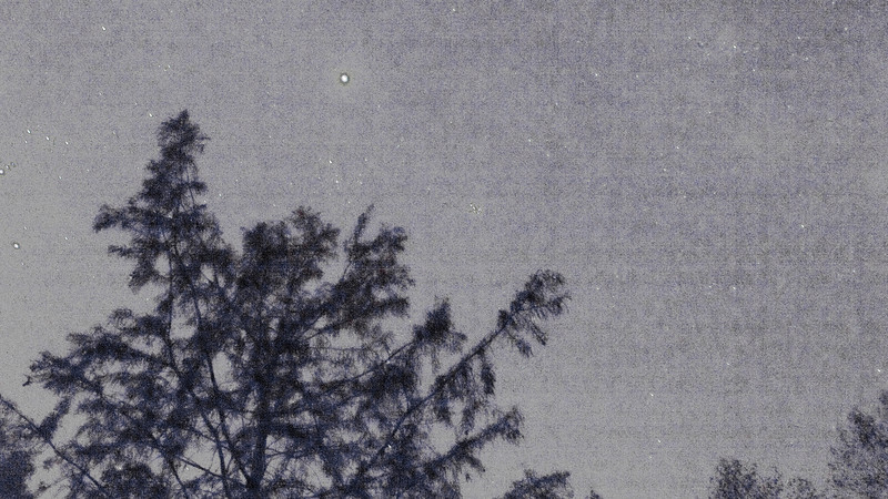 Bald Cypress, Stars and digital canvas.  This is a 30 second exposure of a clear night sky, with some city light coming from the left, under Orion's belt.  The pattern of the digital sensor can be seen as if it were the canvas.