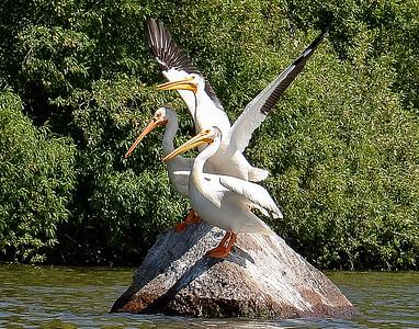 07-12-2012 Sue and Mo Kayaking at Eagle Ridge