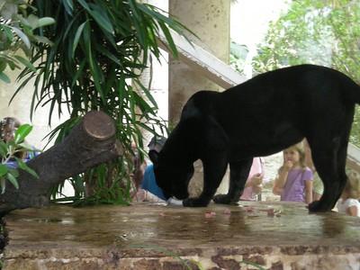 Wilke Family Dallas Visit (2007)