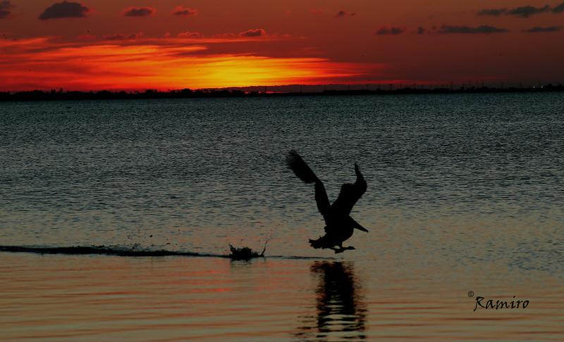 Laguna Madre IMG_3518.jpg