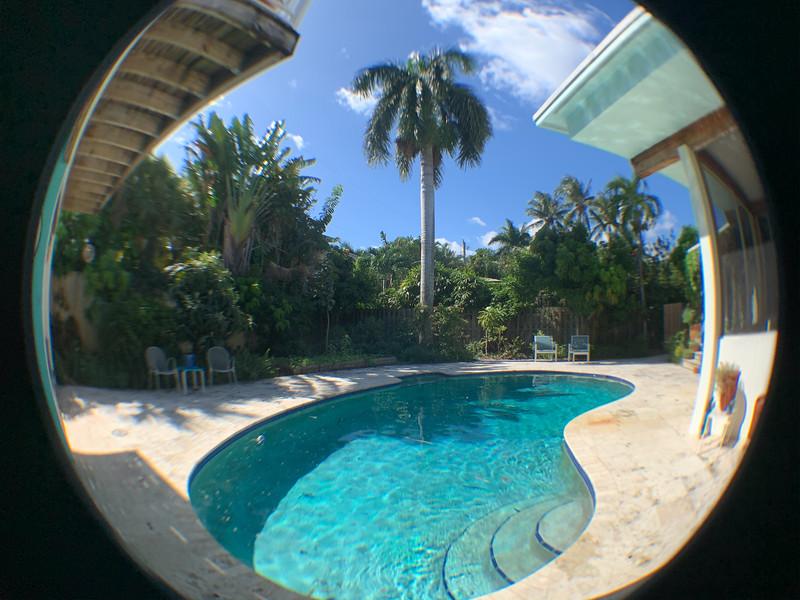 palm tree fisheye