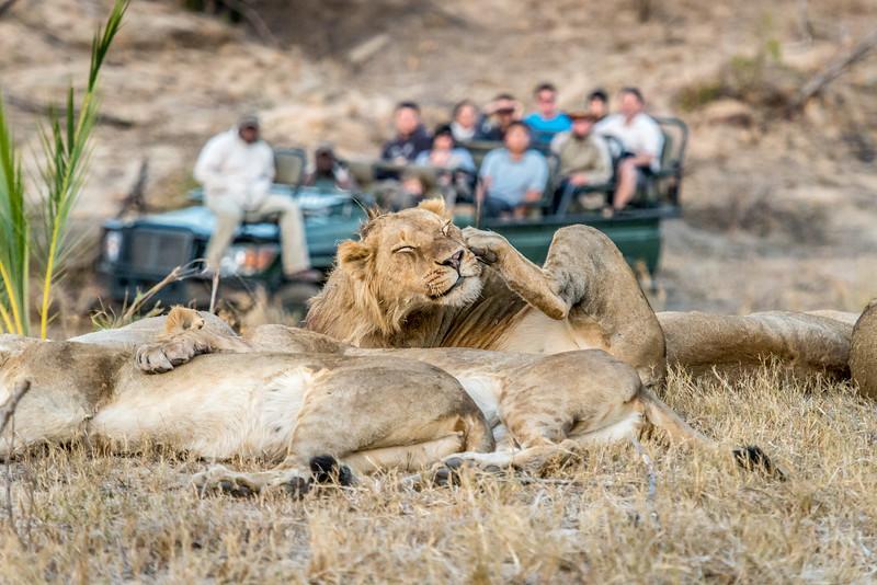 Zuid Afrika 2015 363.jpg