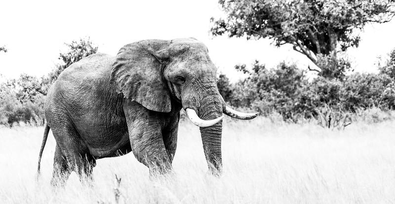 Botswana_ DSC03596.jpg