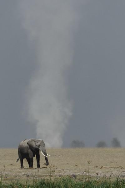 Elephant and dust deveil Amboseli