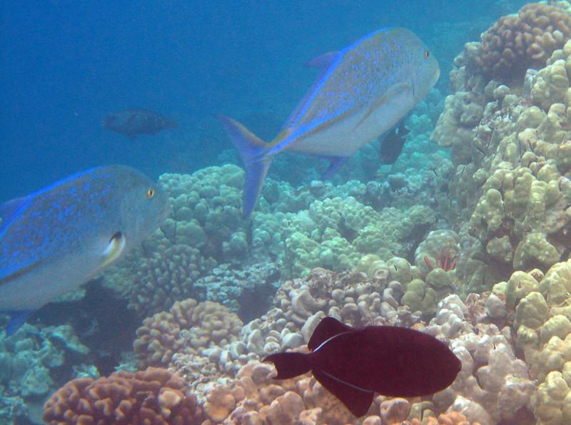 506- 20080416- Hawaii 20-Snorkelling IMG_0756.jpg