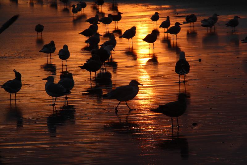 Orange Seagulls @Bruce Handy 2014 [All Rights Reserved] 24x16.JPG