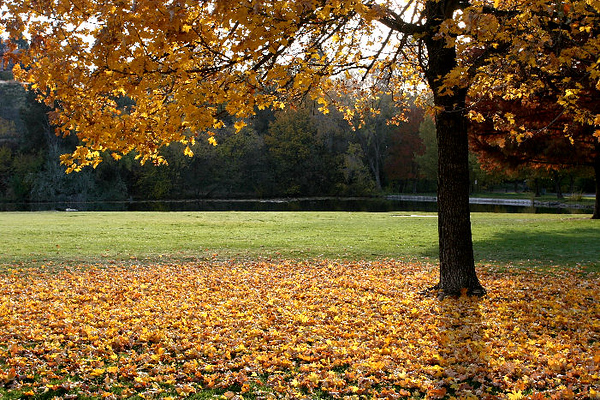 Fall_Images_103008_0067_small.JPG