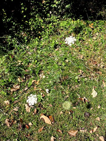 Nature in Fall - October-November 2004