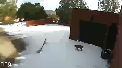 Bobcat Videos