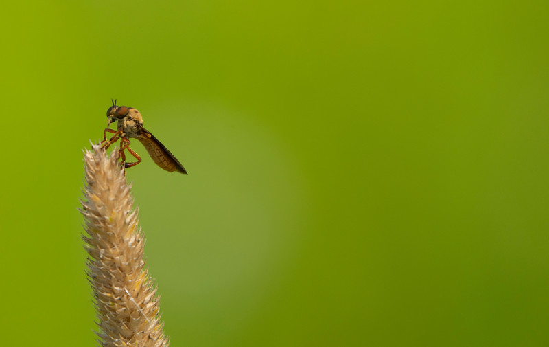 Springfield-bog-flys-2019d.jpg