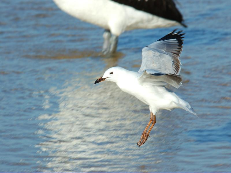 Silver Gull Landing.jpg