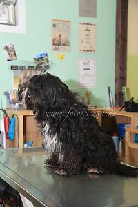 08.02.2014 Hundesalon