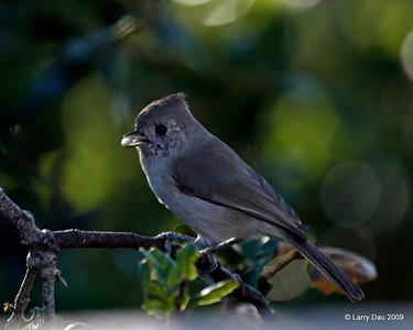 California Wildlife/Birds