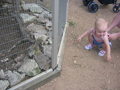 Austin Zoo on Katie's Birthday