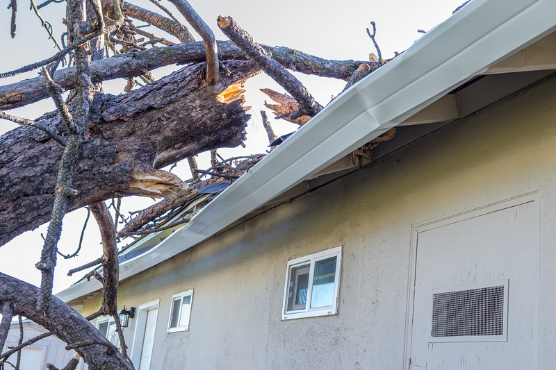 5671 Wallace Ave - Tree 1030am 12 16 2017 Extremly Windy Conditions-8.jpg