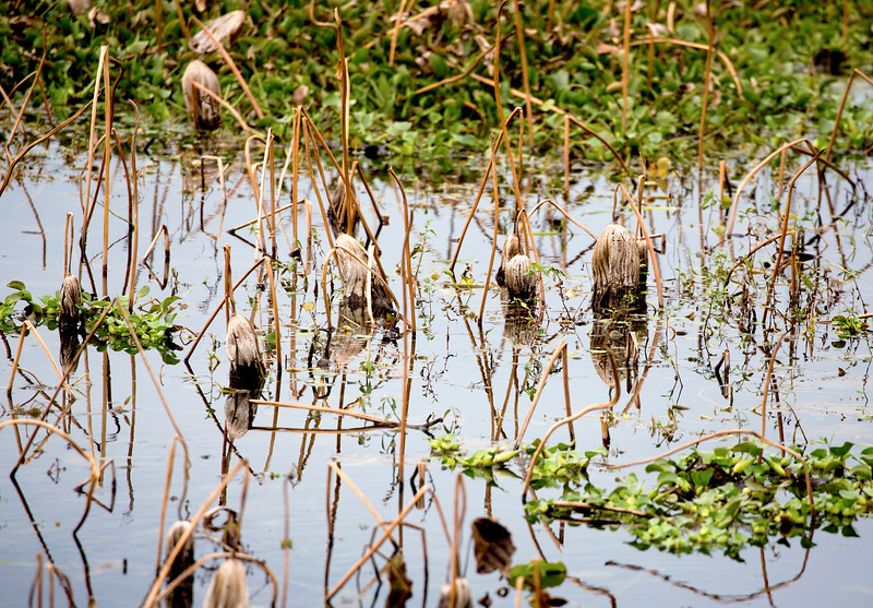More swamp vegetation