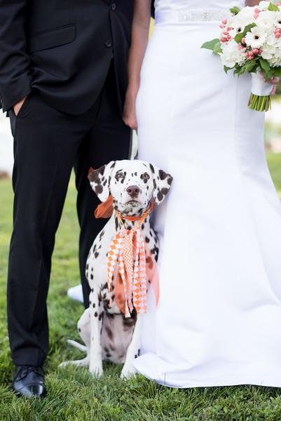 wedding-dalmation (8 of 23).jpg