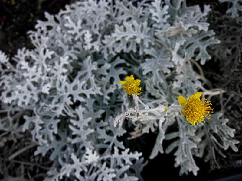 nov 12 - yellow.jpg