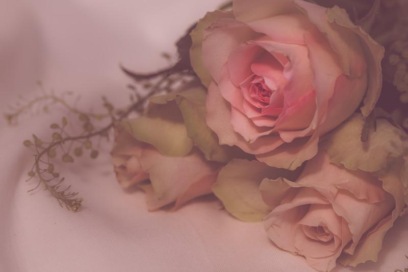 roses soft.jpg