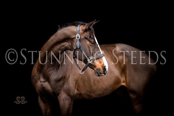 Eclaire - German Sport Horse