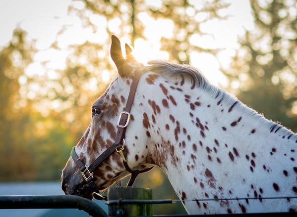 Atterton Performance Horses