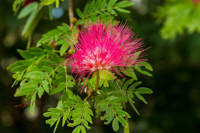 nanaples_botanical_garden_0031-LR.jpg
