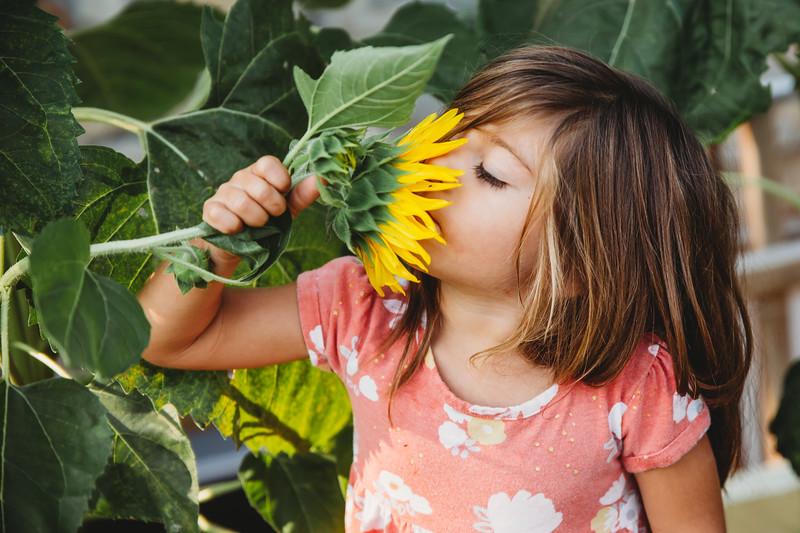 Sunflower (2 of 1).jpg