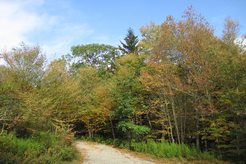Flat Laurel Creek Trailhead