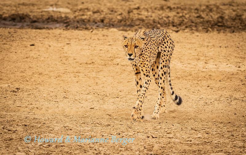 2019 Kgalagadi Transfrontier Park