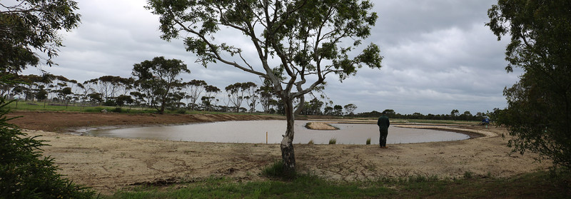 New Wetland.jpg