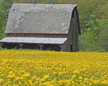 Indiana Landscapes