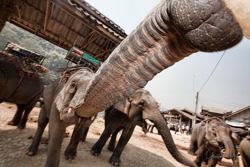 20100227_chiang_rai3_elephant_boat_7059.jpg