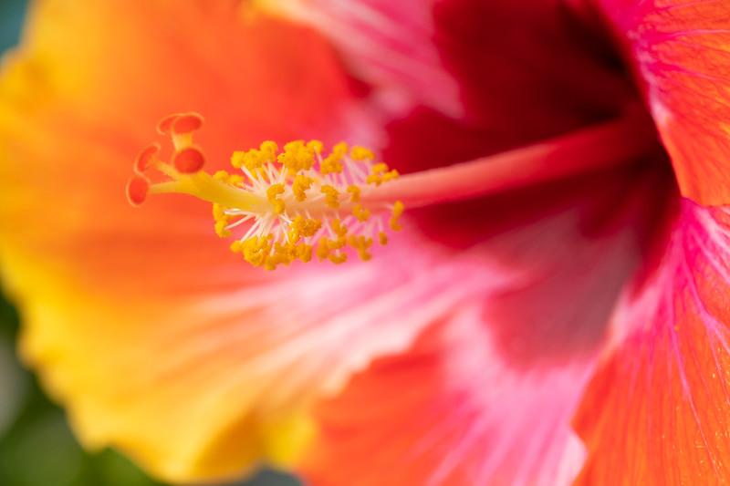 FineArt_Flowers_051520_0244.jpg