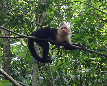 Costa Rica - Manuel Antonio Park June 2017