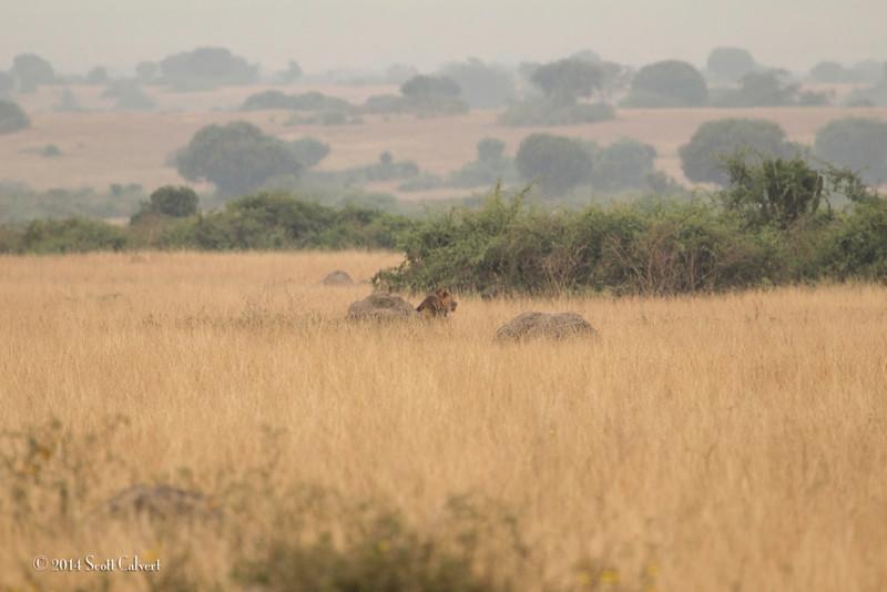 Lions Queen Elizabeth - S-2.jpg