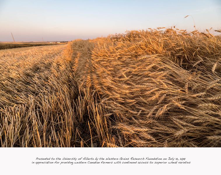 barley 51.jpg