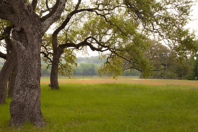 2015_4_3 Texas Wildflowers-8118.jpg