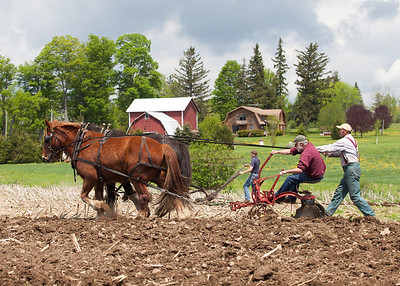 New York State Draft Horse Club Plowing Demonstration