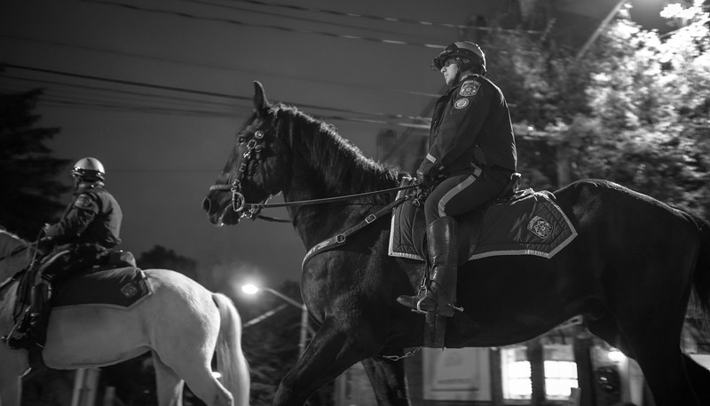 Rockland County Sheriff Horses