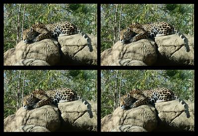 Birmingham Zoo 12/27/20