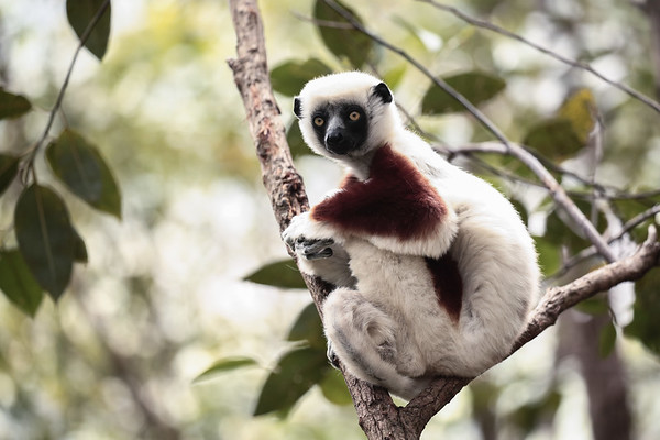 Wonders of Madagascar