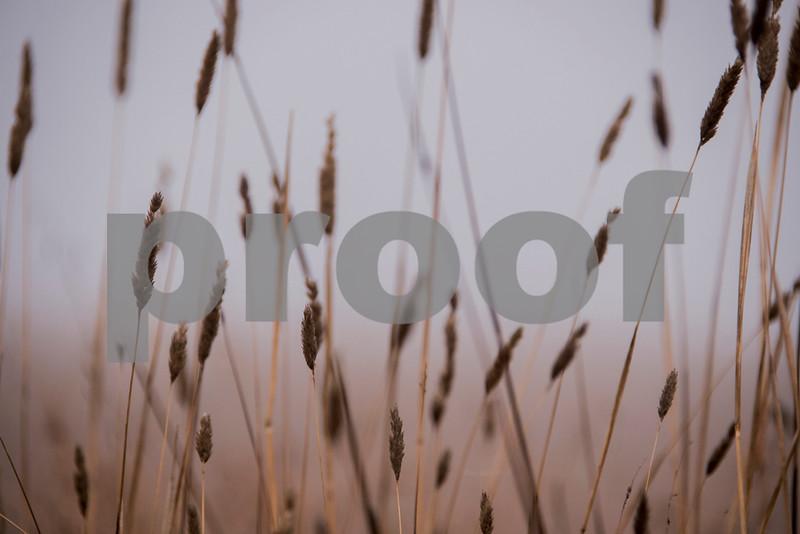 foggy grasses.jpg