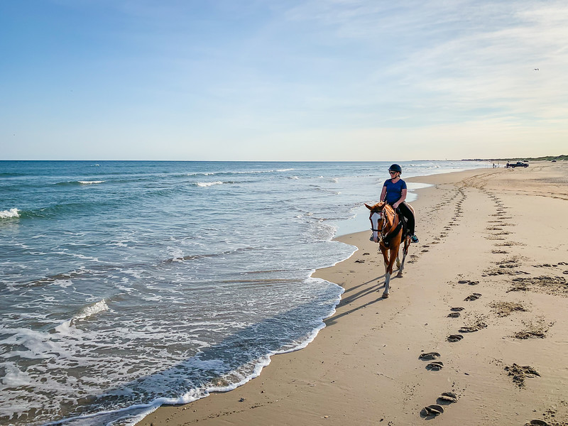 Horseback riding - Hattera Island Outer Banks