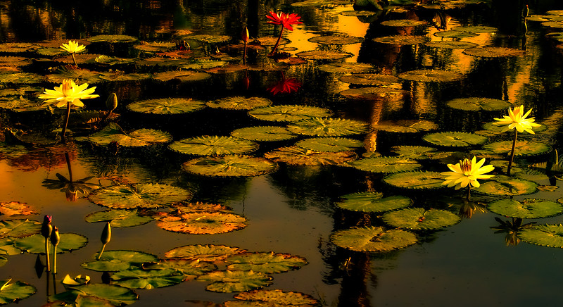 The Lily Pond 66.jpg