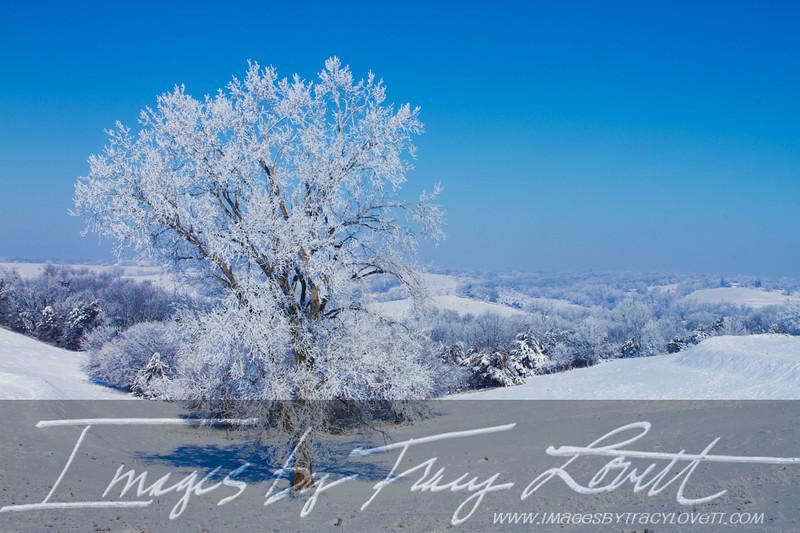 snow_3264 copy.jpg