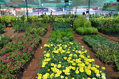 2011 - Lions Flower Show - Kannur