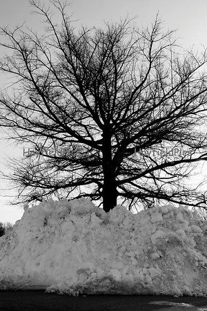 Snow 2/16/10