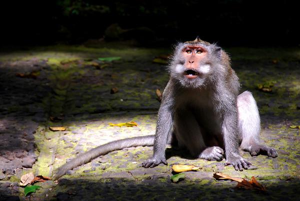 Ubud Monkey Forest & Bird Migration