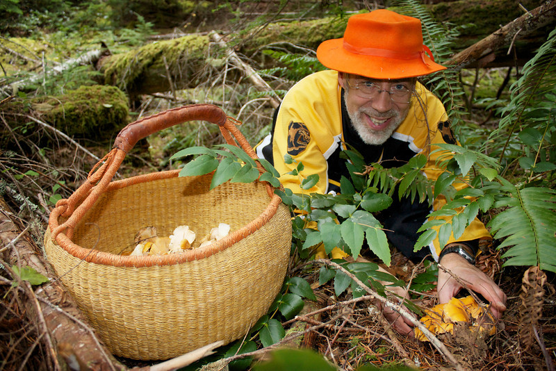 Hunting for Cantharellus formosus, Golden Chanterelles